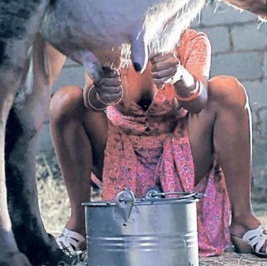 Ivana Sert süt sağdı