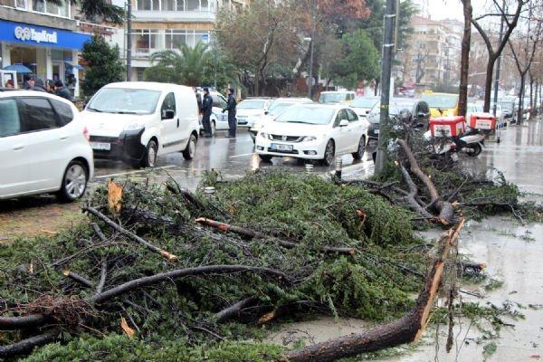 Fırtına, Bağdat Caddesi'nde bir ağacı devirdi