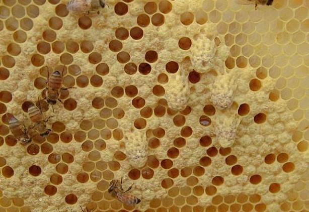Arı sütünün inanılmaz faydaları