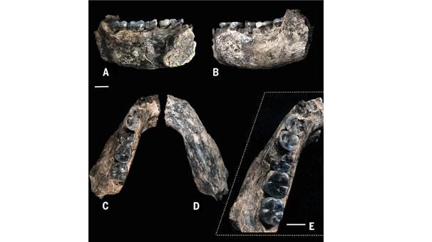 İlk insan bulundu