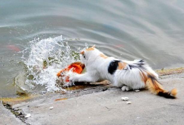 Kedinin mükemmel avı
