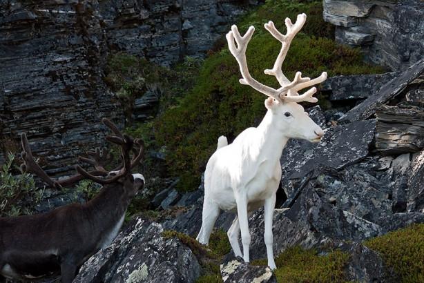 Doğanın beyazları