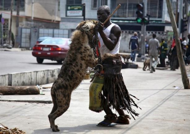 Afrika'nın evcil hayvanları!