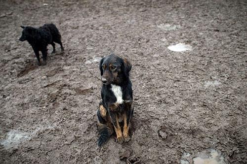 450 köpeği tek başına kurtarmaya çalışıyor