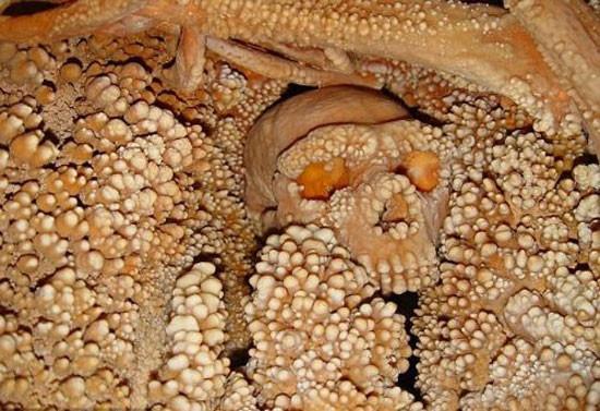 187 bin yaşındaki iskelet