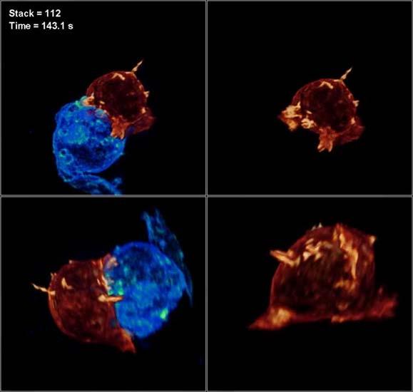Canlı bir hücre ilk kez görüntülendi