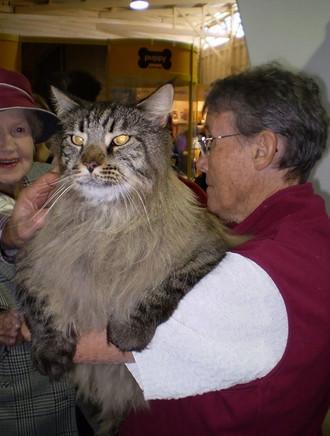 Kedi mi kaplan mı belli değil!