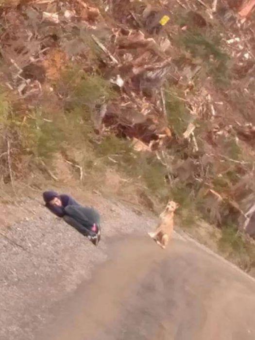 Bir köpeğin hikayesi