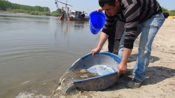 Taşkın suları çekilince tarlalar balıkla doldu