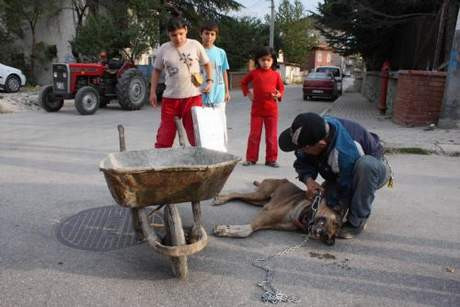 Köpeğe demir çubuk sapladılar