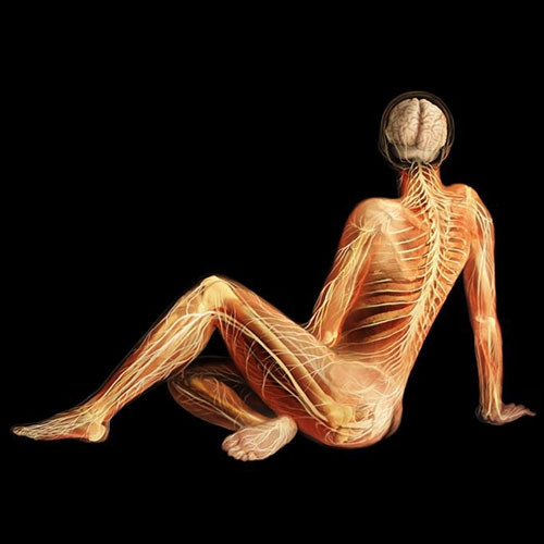 İnsan vücudunu böyle görmediniz