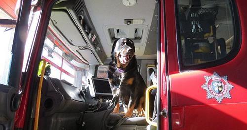 6 haftalık ömrü kalan köpeklerinin son isteklerini yerine getiren çift