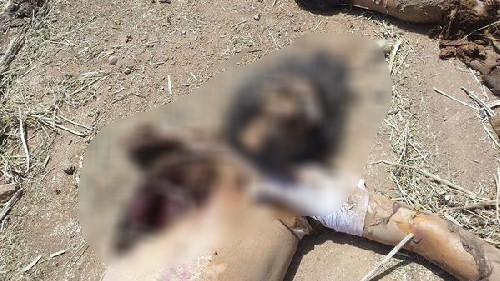 Bu sefer IŞİD militanları hedef oldu