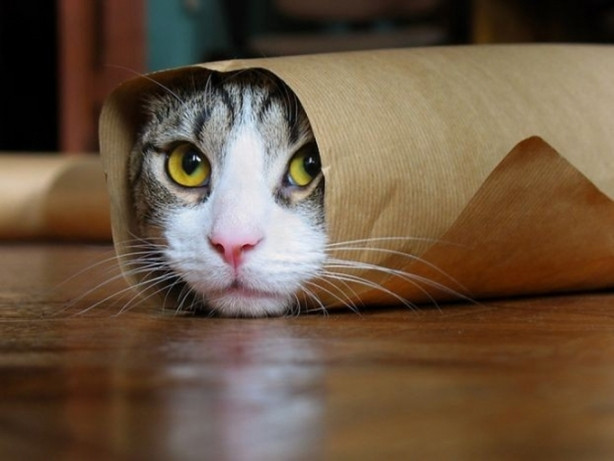 Seçimde trafo kedileri neredeydi ?