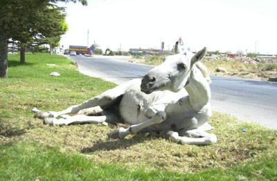 Yaralı atı ölüme terkettiler