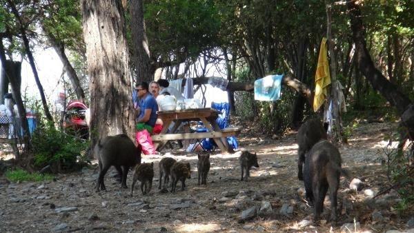 Piknik alanlarında davetsiz misafirler