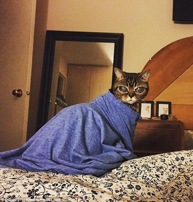 Uzaylı kedi Matilda