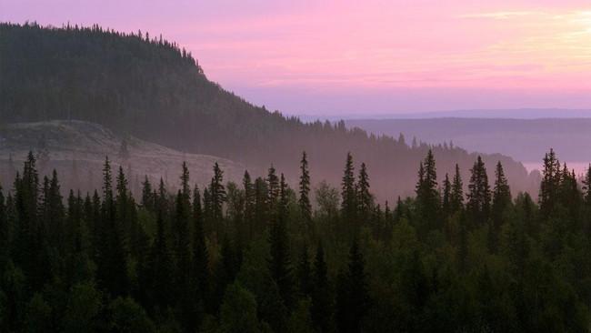 Karadeniz'in cennet ormanları tehdit altında