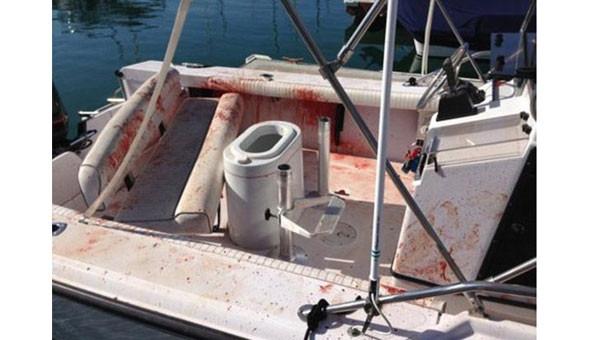 Tekneye zıplayan yunus dehşet saçtı