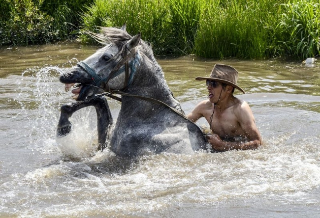 Kars'ta atlara dere molası