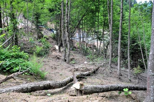 Kesilmedi denen ağaçlar görüntülendi