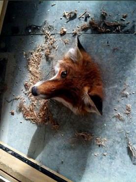 Zor durumlarda kalan hayvanlar