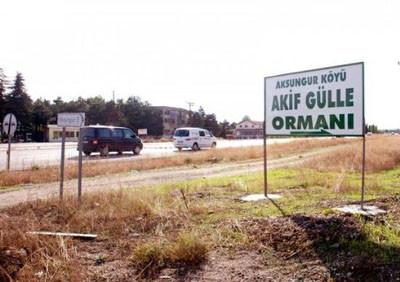 AKPnin ormanlar kralı