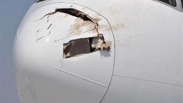Singapur Havayolları uçağı leylek sürüsüne girdi, acil iniş yaptı