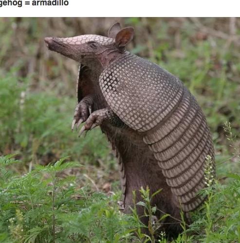 Ömrünüzde görmediğiniz 11 şaşırtıcı hayvan türü