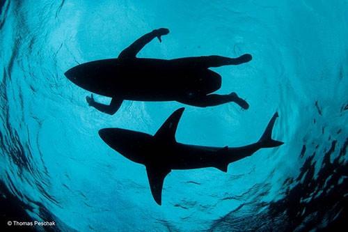 Vahşi hayat fotoğrafçılarının kadrajından dünya harikaları