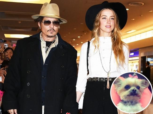 """Johnny Depp: """"Köpeklerimi öldürüp yedim"""""""