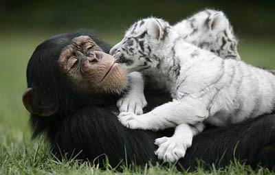 Dünyanın en sıradışı dostluğu