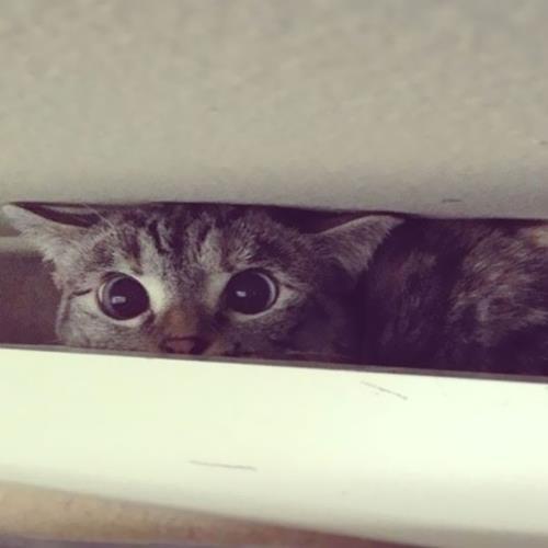 Instagram'ın en meşhur kedisi ile tanışın: Nala!