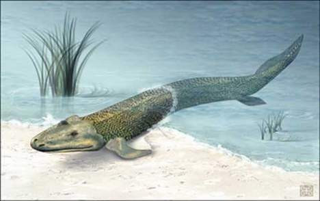 375 milyon yıllık balık fosili