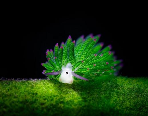 Derin Suların Fantastik Canlıları