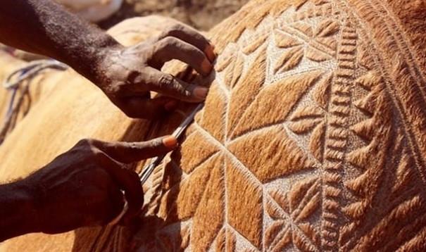 Hayran bırakan deve sanatı
