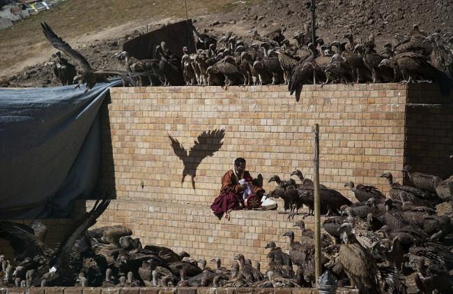 Ölüleri yedirmek için akbabaları bekliyorlar!