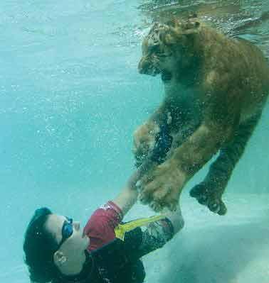 Kaplanlara havuz terapisi