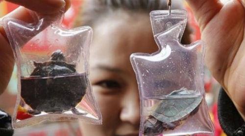 Pes dedirten Çinli mucitler