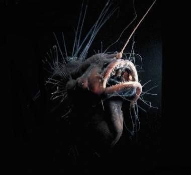 Okyanusun derinliklerindeki canlılar