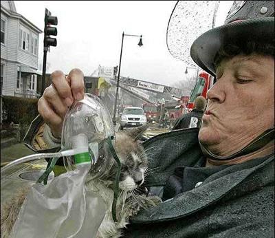 Talihsiz kediler