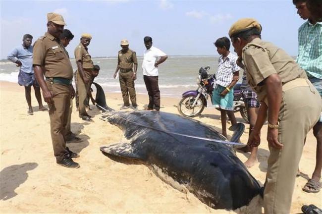 Kıyıya vuran balinalar için zamana karşı yarış