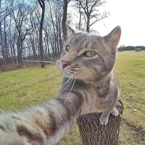 Selfie ustası ''Kedi Manny''