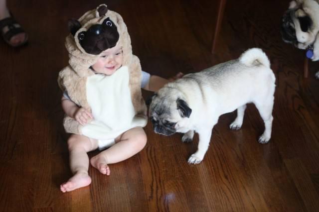 Bebek ve köpeklerin kıskandıracak dostlukları
