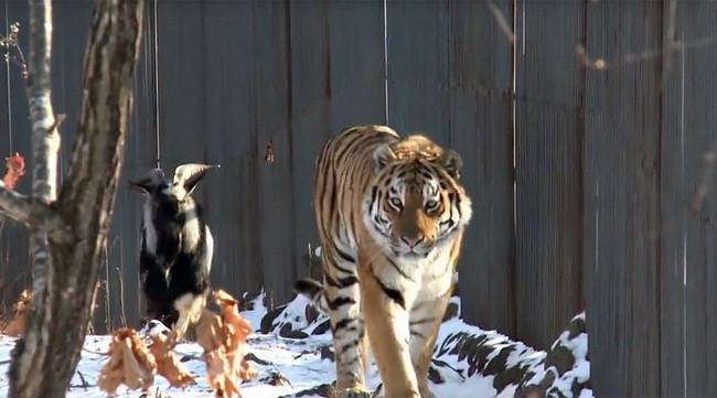 Hayvanların şaşırtan doslukları