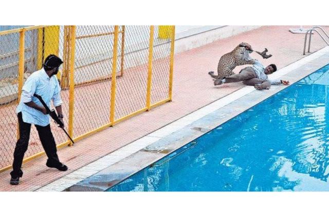 Okula giren leopar 6 kişiyi yaraladı