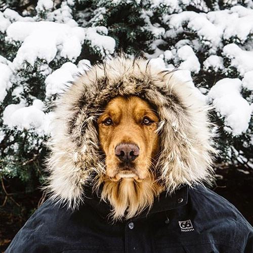 Sosyal medyanın gezgin köpeği Hunter