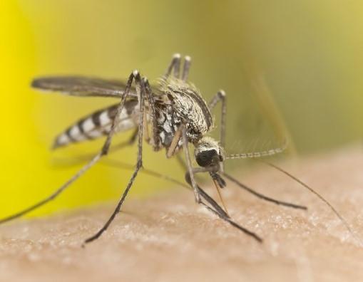 Sivrisinekler öldürmeye devam ediyor !