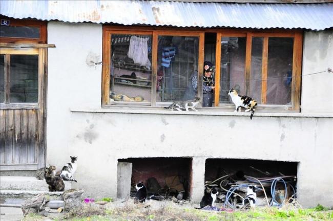 Kediler aç kalır diye köyü bırakmıyor!