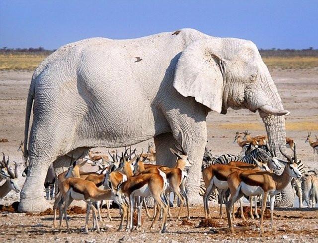 İşte 'gen hatası' olan hayvanlar!
